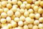 免税进口大豆